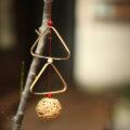 11月20日(金曜日)の竹のお教室のお知らせ